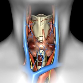 Тиреоидэктомия, передняя (одно- или двусторонняя)-1