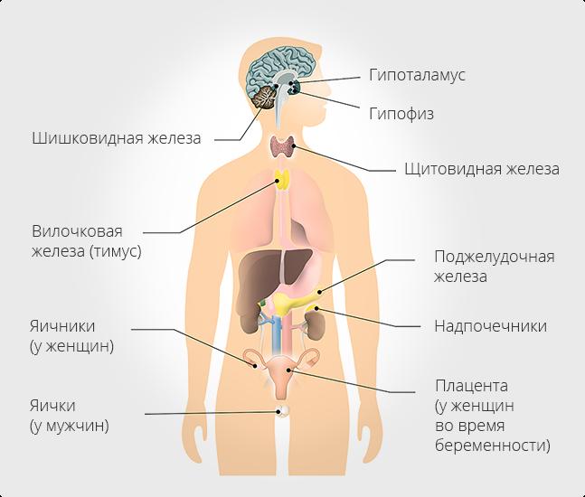 Органи з ендокринними клітинами