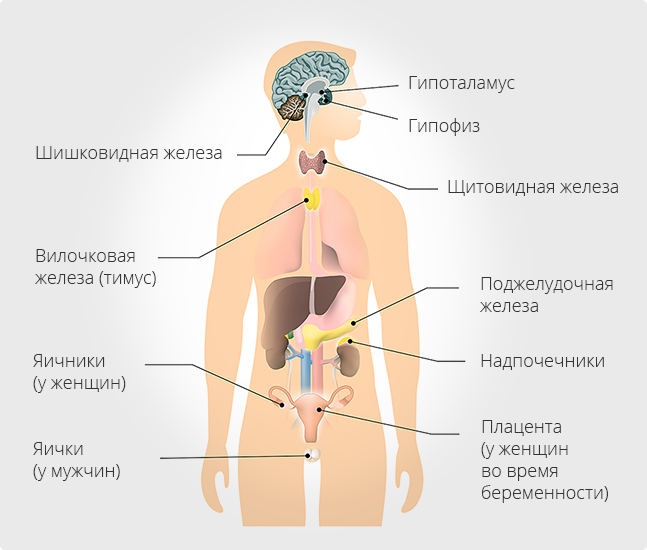 Органы с эндокринными клетками