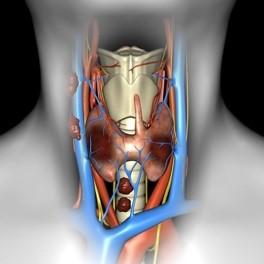 Тиреоидэктомия, передняя и селективная латеральная шейная диссекция - 1